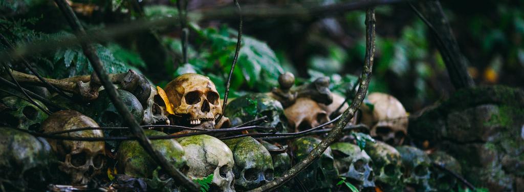 Guia de Sobrevivência na Selva Cibernética