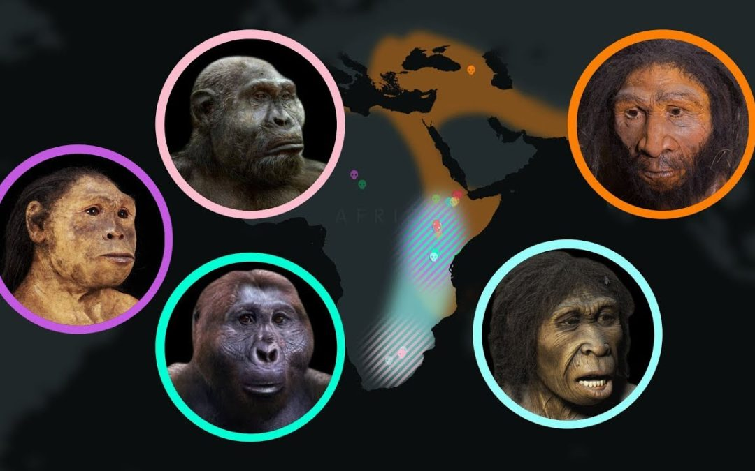Seven Million Years of Human Evolution in less than 7 minutes
